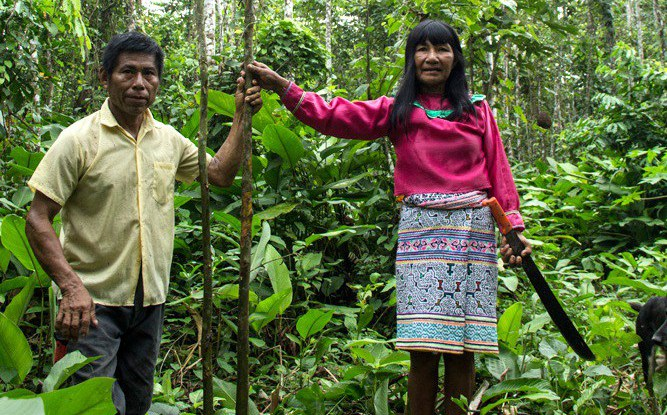 Collective forest tenure reforms: Where do we go from here?