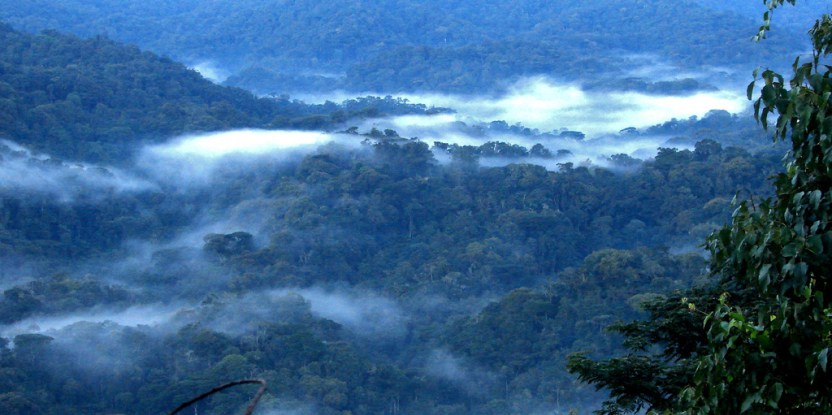 East Africa: An urgent need to monitor the forests