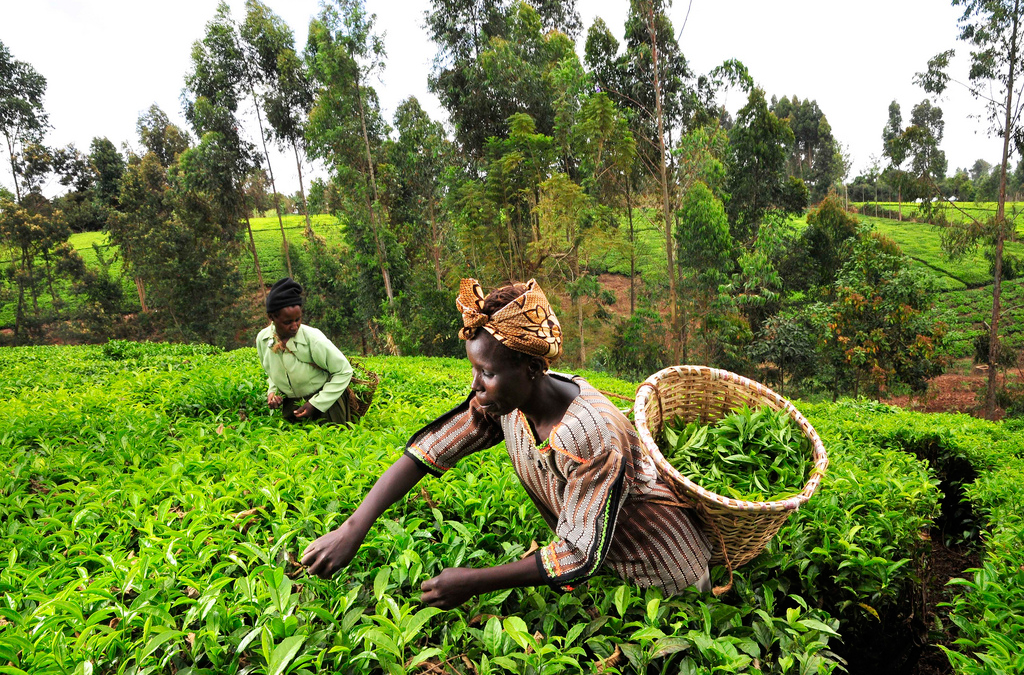 CIAT-CCAFS Science Informed $250 Million World Bank Climate-Smart Agriculture Investment