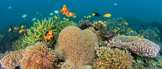 Myanmar designates first marine areas protected by local fishing communities
