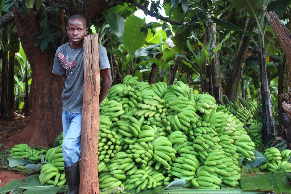 The Humble Banana Transforms an Entire Community in Eastern Zimbabwe