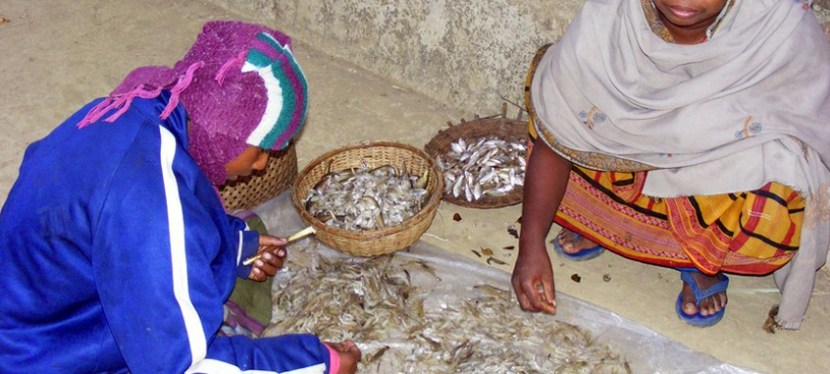 Understanding well-being in the dried fish sector in Bangladesh