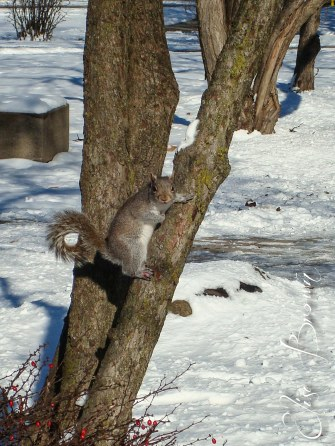 One of the infamous Purdue squirrels.