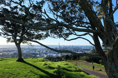 The view of the City Centre from Mt. Eden. The Sky Tower can be seen in the middle of the branches.