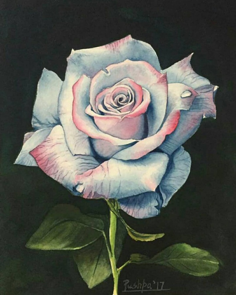 Glow of Rose, painting by Pushpa Sharma, watercolour on paper, 8 x 6 inches