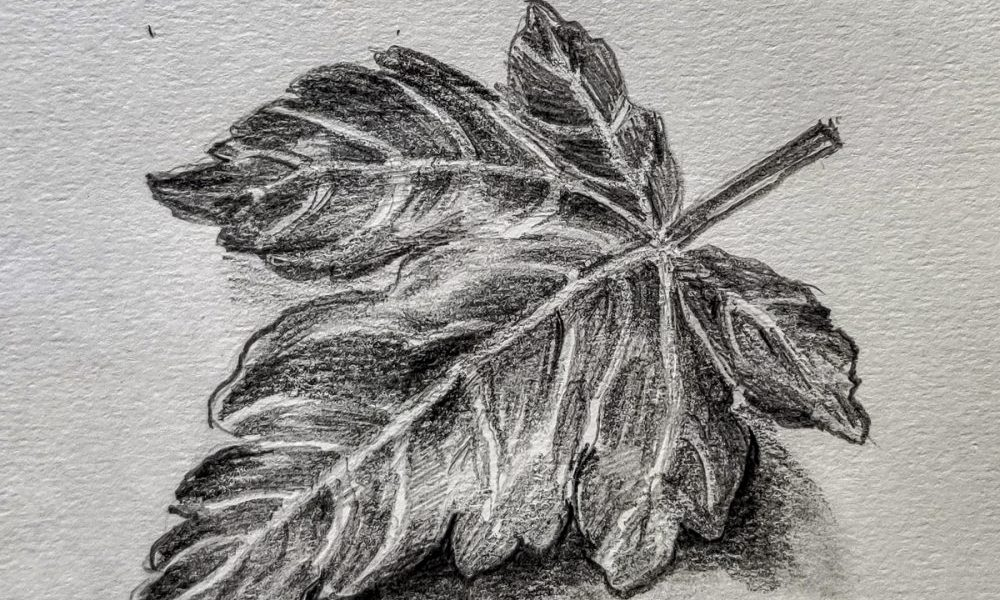Drawing demonstration of pencil drawing to explain how to draw