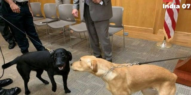 Massachusetts county first to use COVID-sniffing dogs