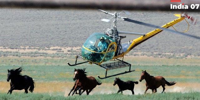 US plans 50% more wild horse roundups amid Western drought