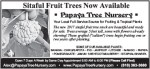 Papaya Tree Nursery