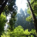 The 'Browning' of California's Green Movement