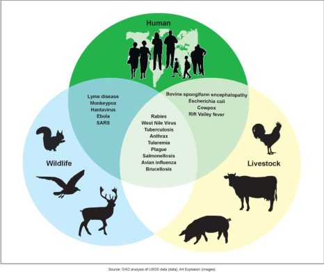 Examples of zoonotic diseases and their affected populations.