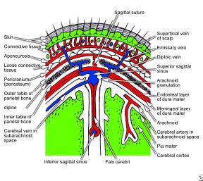 skalp-anatomy