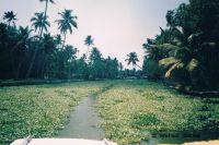Backwaters (Kerala, India)