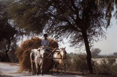 Rural Sindh (Pakistan)