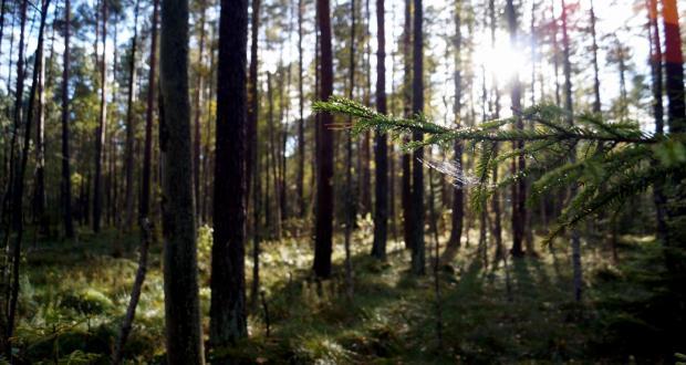 A view of Białowieża Forest, Belarus-Poland. CREDIT: IUCN Elena Osipova