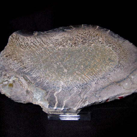 polished dinosaur bone slice 4