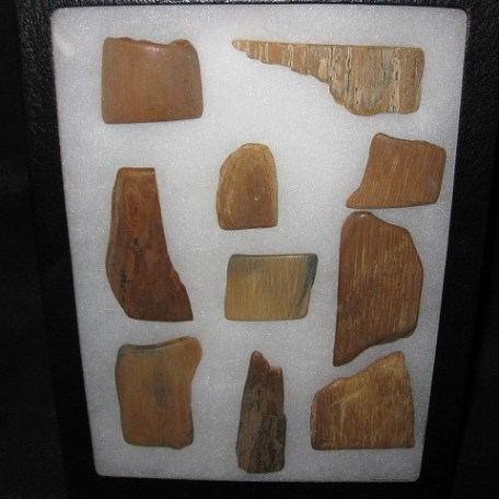 Pleistocene Age Fossil Mammoth Tusk Ivory Pieces from Alaska