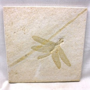 Fossil Jurassic Age Dragonfly from The Sublithographic Solnhofen Limestone of Germany