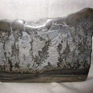 Fossil Triassic Age Cotham Marble Stromatolite from England