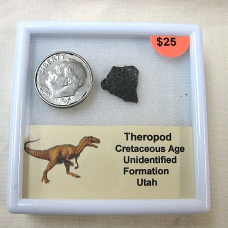 Fossil Cretaceous Age Theropod Dinosaur Egg Shell from Utah
