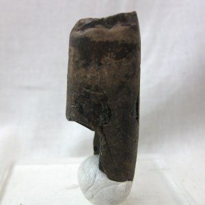 Fossil Pleistocene Age Megalonyx Ground Sloth Tooth from Florida