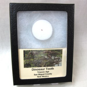 Fossil Triassic Age Dinosaur Tooth from New Mexico