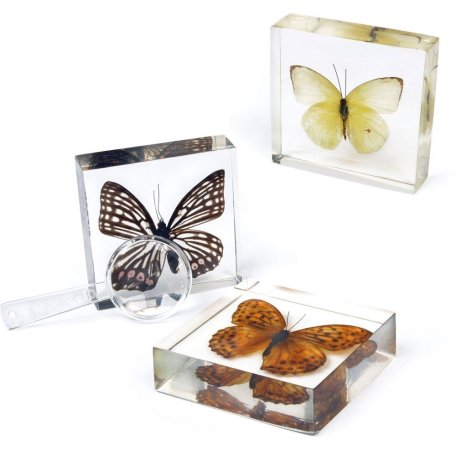 3 Butterfly Collection 2
