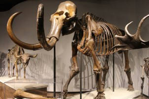 The Last Woolly Mammoths | A Moment of Science - Indiana Public Media