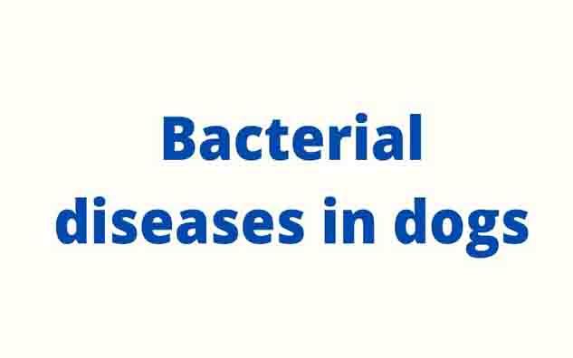 Bacterial diseases in dogs