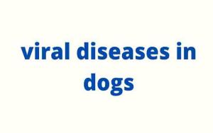viral diseases in dogs : Symptoms and how to treat them