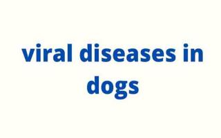 viral diseases in dogs