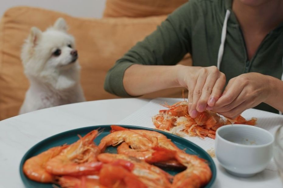 Can dogs eat shrimp