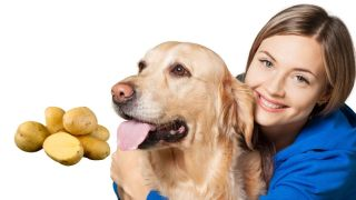 Can dogs eat potato
