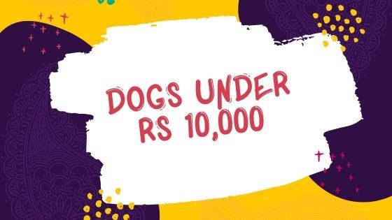 Dogs under 10000