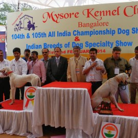Indian Breeds Speciality Dog Show 2014