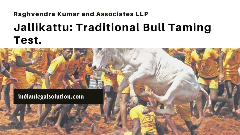 Jallikattu: Traditional Bull Taming Test.