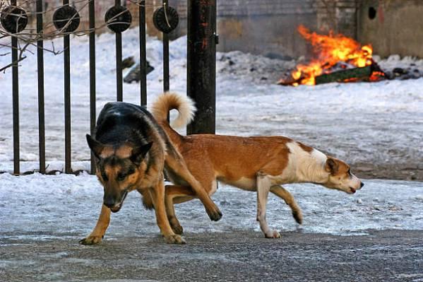 कुत्तें का लंड क्यों अटक जाता है कुतिया की चूत में Animal sex xxx pic dog fucking