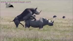 गैंडे के लंड से चूत फट गयी XXX Fucking Pic Rhinoceros Big Cock Fucking Animal Sex (1)