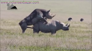 गैंडे के लंड से चूत फट गयी XXX Fucking Pic Rhinoceros Big Cock Fucking Animal Sex (2)