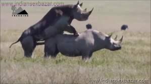 गैंडे के लंड से चूत फट गयी XXX Fucking Pic Rhinoceros Big Cock Fucking Animal Sex (4)