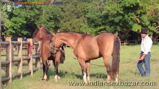 Animal Sex Girl Sex With Animals Girl sex with horse Ful HD Porn (2)