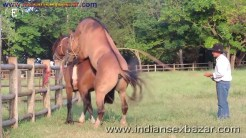 Animal Sex Girl Sex With Animals Girl sex with horse Ful HD Porn (3)