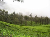 Munnar Tourist Places Pictures 5
