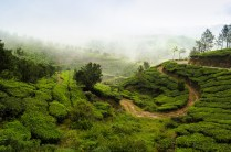 Munnar Tourist Places Pictures1