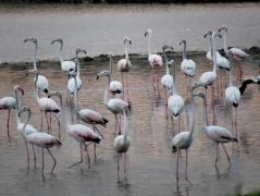 davidson_wetland_ecosystem_05