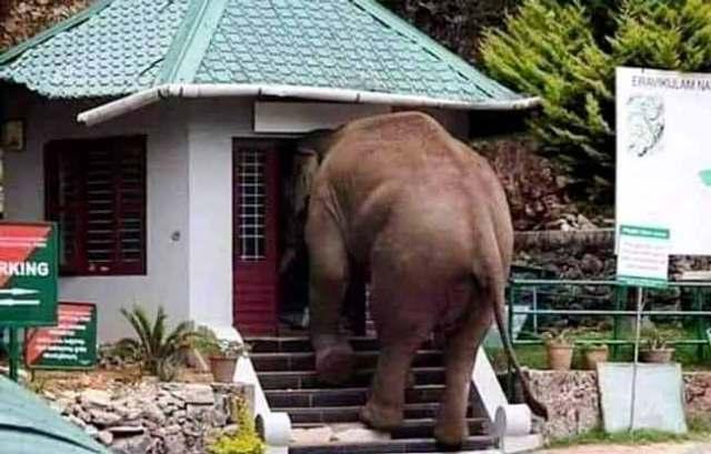 davidson_2020-tourism-elephant-a