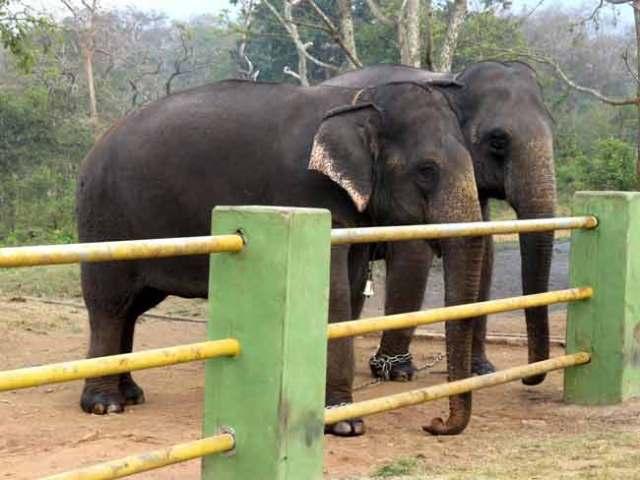 davidson_2020-tourism-elephant-e
