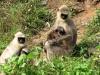 davidson_2020_v_forest_monkeys