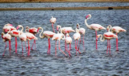 flamingo-davidson-2020-01