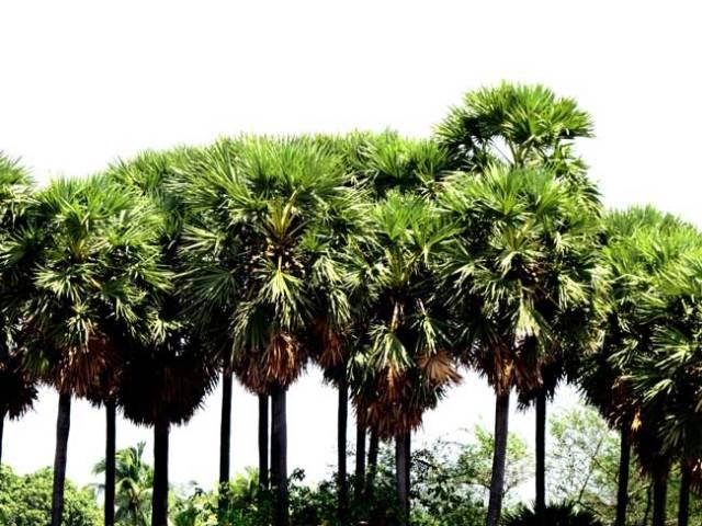 davidson-palmyra-planting_davidson_01